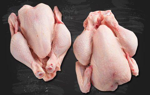 pollo-pio-1.jpg